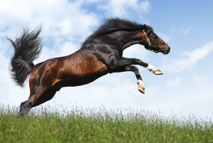 arabian stallion jumps - realistic photomontage